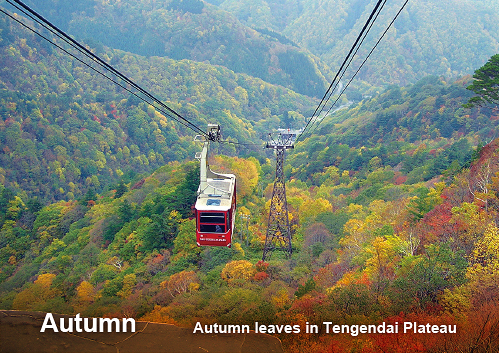 Autumn leaves in Tengendai Plateau